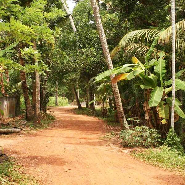 Samhathi Wald